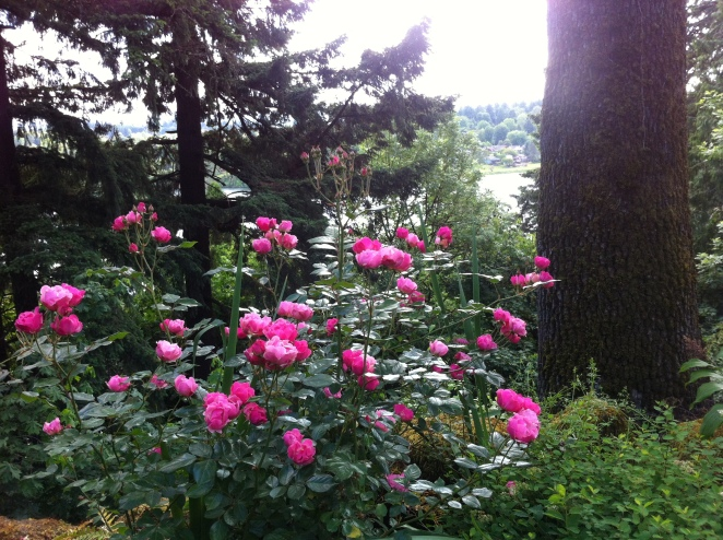 Elk Rock Garden and manor house occupies about thirteen acres on a bluff overlooking the beautiful Willamette River