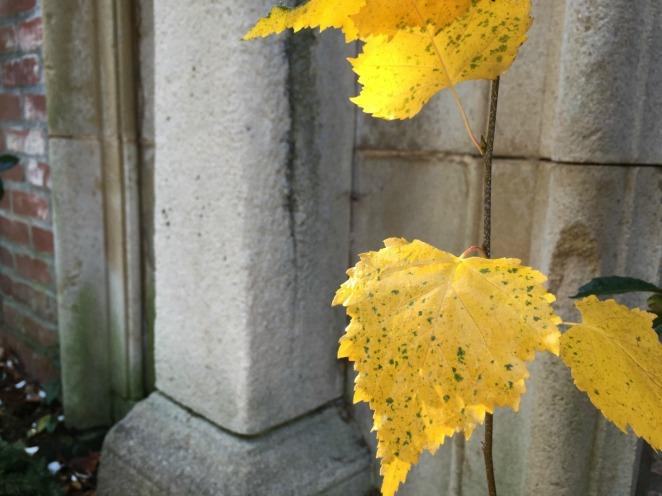 yellowleafWPark