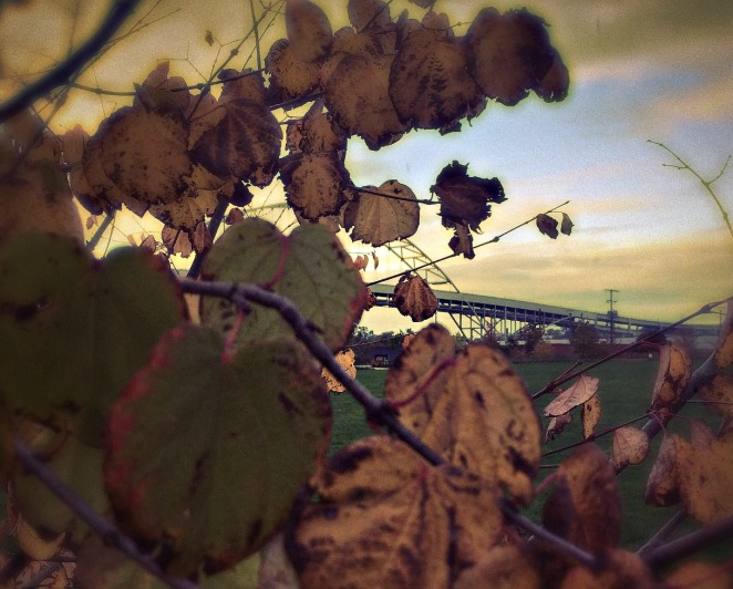 sear.leaves