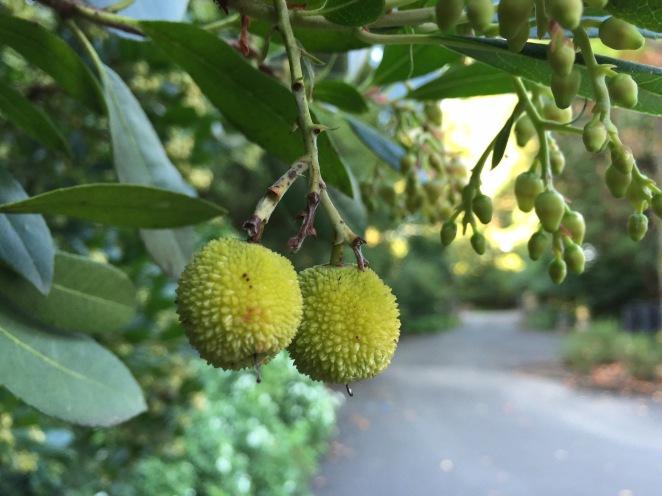 fruithanging