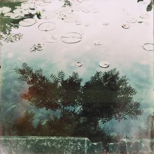 pool, lilypads