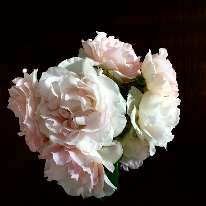 RosesSilhouette